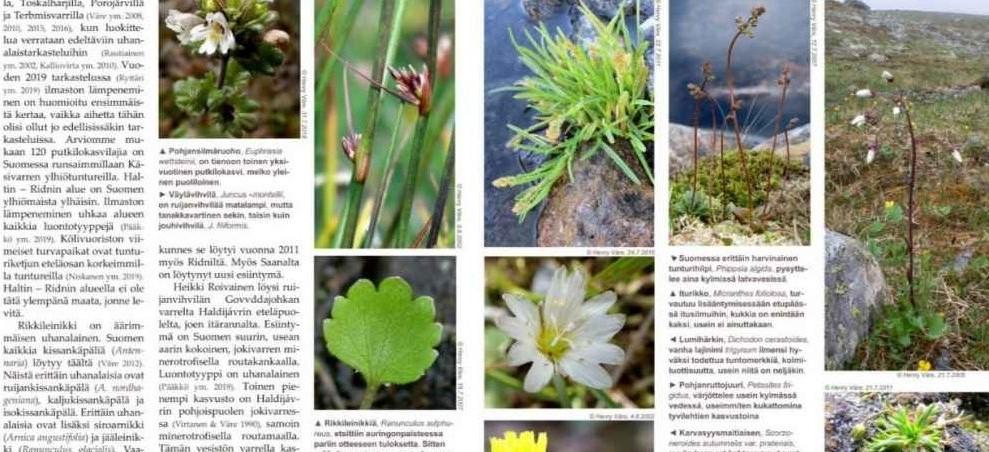 Lutukka – kasviharrastajan ja -tutkijan lehti sähköisenä!