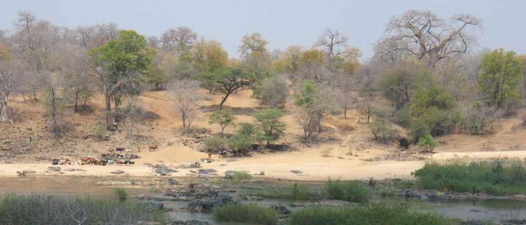 Ensimmäiset suorat todisteet eteläisen Afrikan jurakautisten laakiobasalttien pluumilähteestä